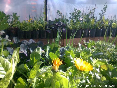 Fotos de vivero org nico sonyando en villa devoto for Vivero organico