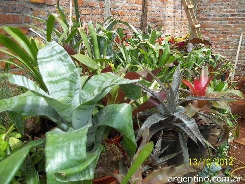 Cactus plantas ex ticas en ober tel fono for Vivero plantas exoticas