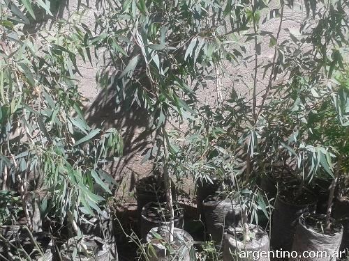 Fotos de vendo lote de plantas artesanales en bah a blanca for Jardin 935 bahia blanca